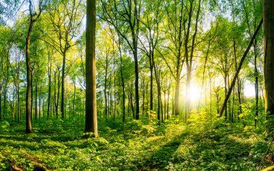 Fokus på bæredygtighed